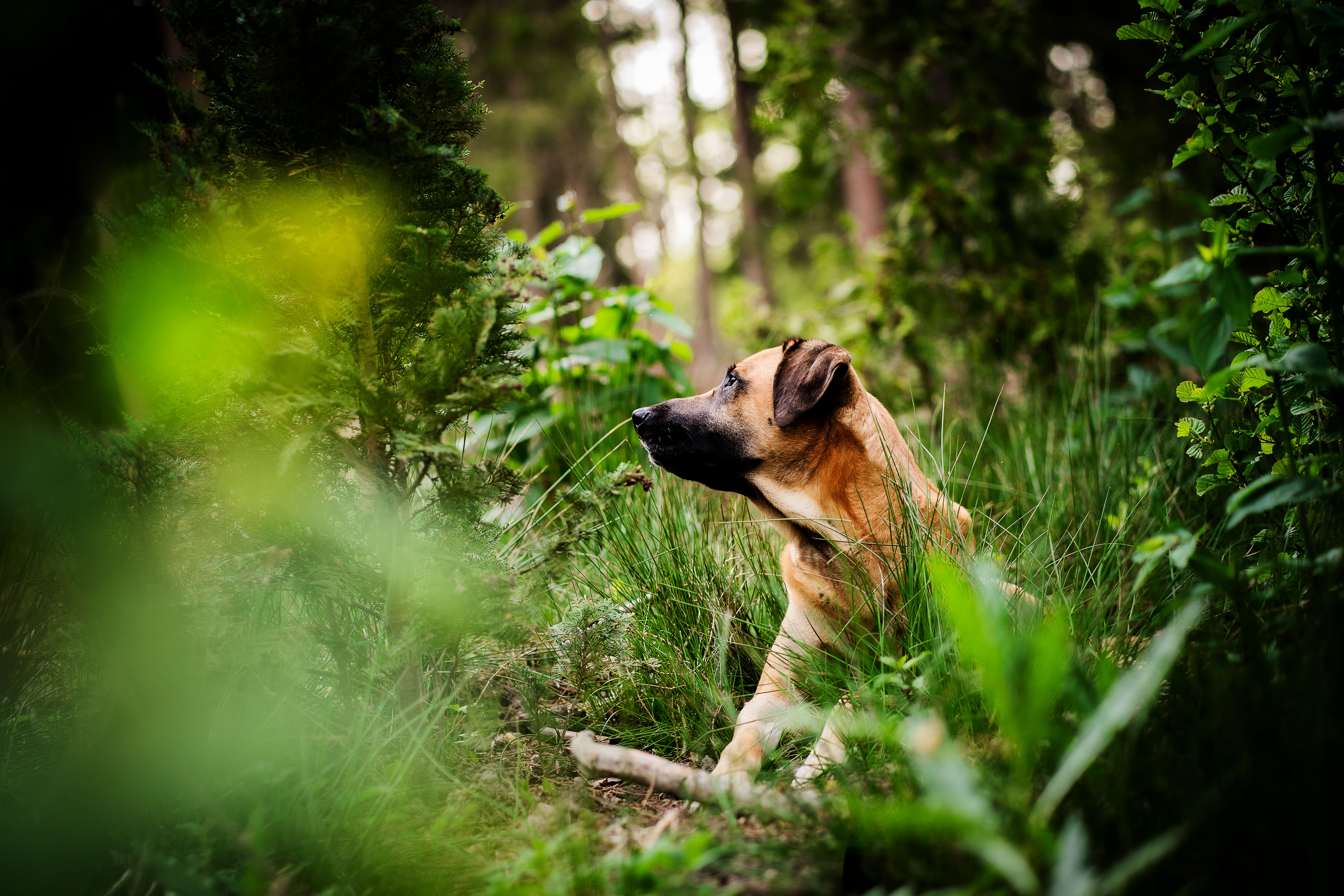 Hund, Hundefoto, Hundefotografie, Hundefotografin, Retriever, Labrador Retriever, Mix, Mischling, Rodesian Ridgeback,